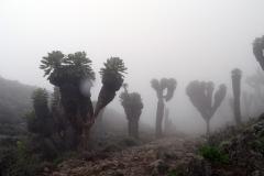 Beautiful Senecio Forest
